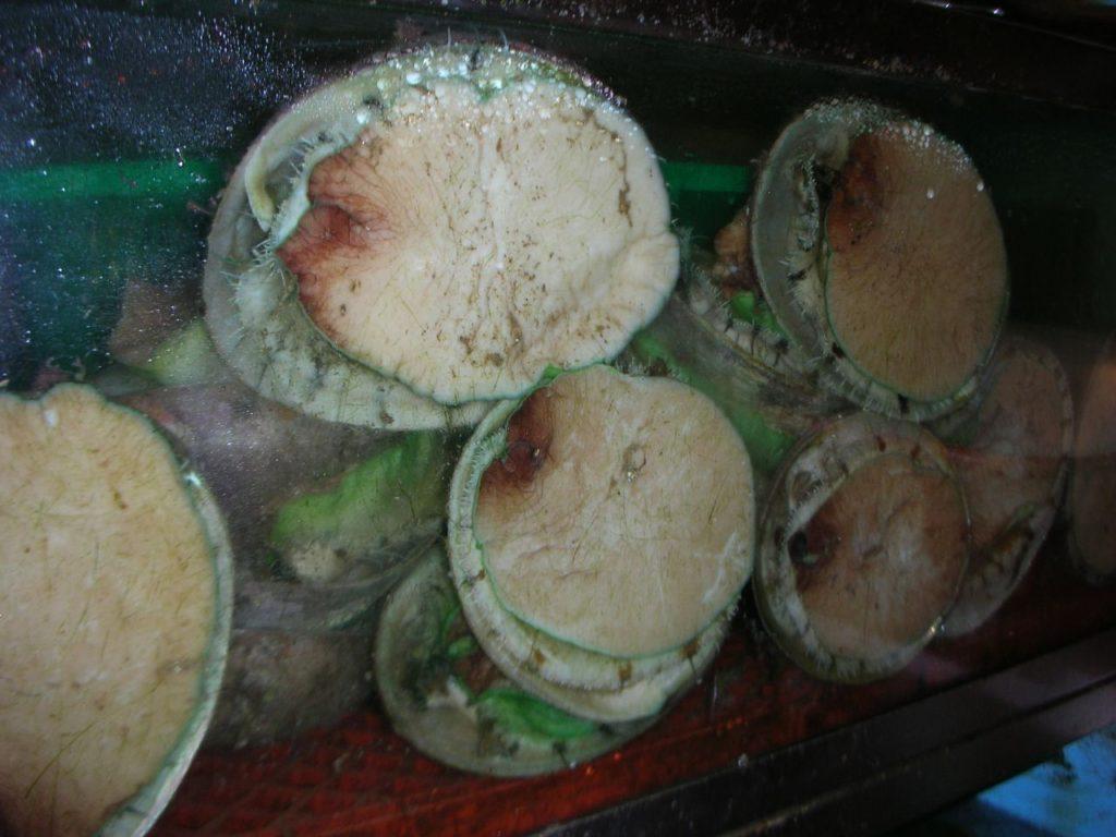 Abaloni